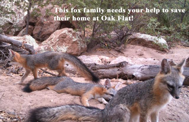 Fox family plea